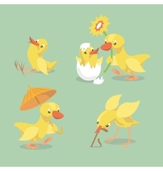 Cute chicken and duckling vector image vector image