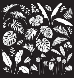 tropical leaves and flowers white silhouette set vector image