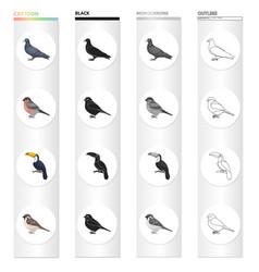A dove a song bullfinch a tropical bird a tukan vector