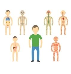 Cartoon man body anatomy vector image