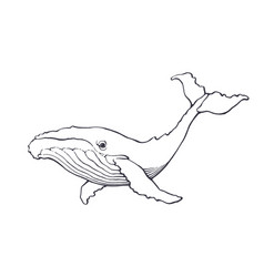 hand drawn ink contour whale vector image