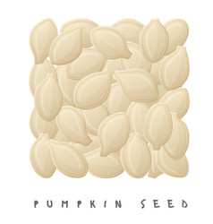 pumpkin seeds square icon cartoon style vector image
