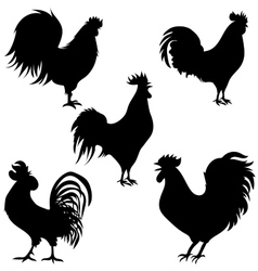 Rooster silhouettes on the white background vector