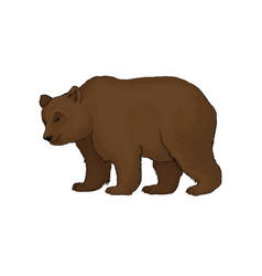 Brown bear wild forest animal vector
