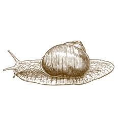 engraving roman snail vector image