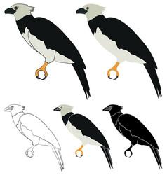Gaviao real bird in profile view vector