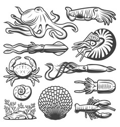 Vintage marine life collection vector