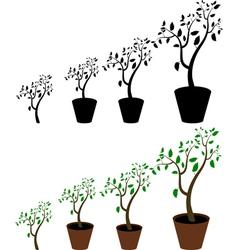 indoor plant vector image