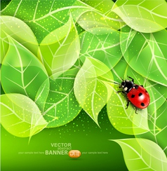 leaves and ladybug vector image vector image