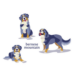 bernese mountain dog vector image