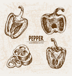 digital detailed line art pepper vegetable vector image