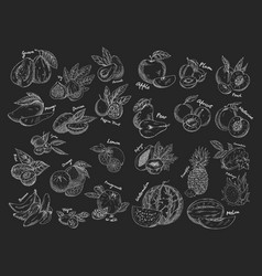 sketches of isolated fruits vegetarian food or vector image