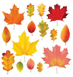 set of colorful autumn leaves isolated on white vector image