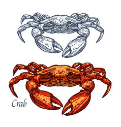 Crab seafood isolated sketch icon vector