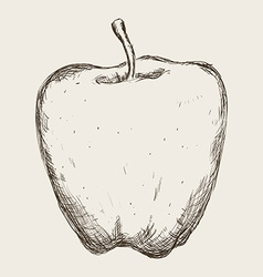 Fruit drawn design vector
