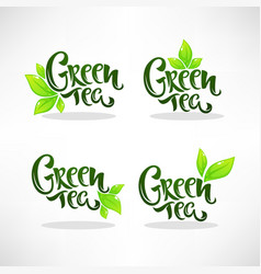 Glossy and shine green herbal tea leaves vector