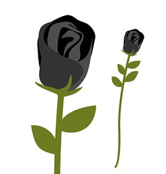 Black rose Dark scary flower Rose petals with vector image