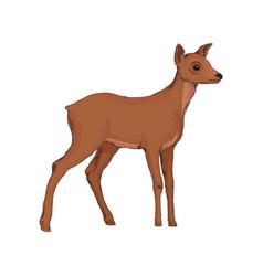 Doe wild northern forest animal vector