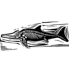 Ichthyosaur dinosaur fossil b vector
