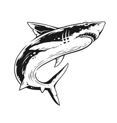 shark black and white contrast art vector image