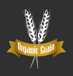 sketch of wheat on black vector image