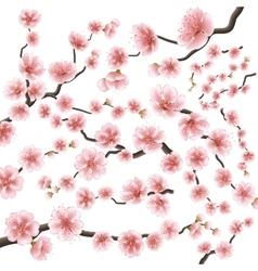 Set of sakura japan cherry branch EPS 10 vector image vector image