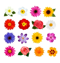 Big collection colorful flowers vector