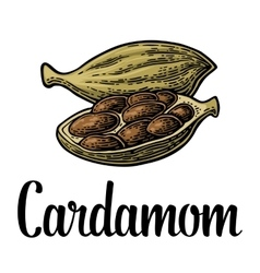 Cardamom spice with seed black vintage vector
