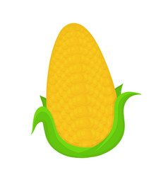 corncob flat cartoon vector image