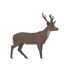 Elk wild northern forest animal vector