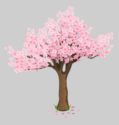 beautiful tree cherry blossoms gentle sakura vector image