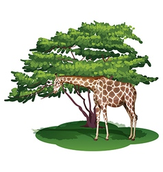 A giraffe under the tree vector image