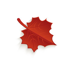 Cartoon autumn fallen maple leaf isolated vector