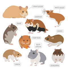hamster breeds icon set flat style isolated on vector image vector image