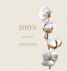cotton branch vector image