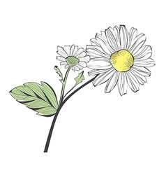 Daisy Flower vector