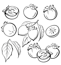 Persimmon fruits and leaves pictograms vector