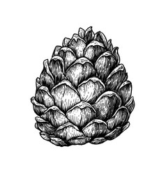 pine cone hand drawn sketches vector image