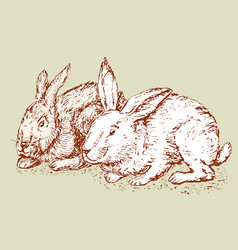 Sketch of the rabbits vector