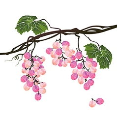 Stylized polygonal branch of rose grapes vector