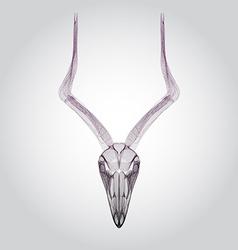 Wireframe goat skull head vector image