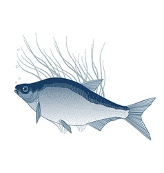 Bream vector