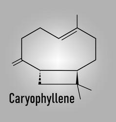 Caryophyllene molecule skeletal formula vector