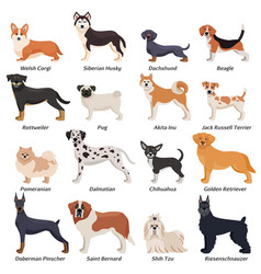 Colored purebred dogs icon set vector