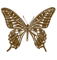 Engraving antique swallowtail butterfly vector