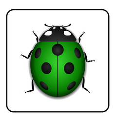 ladybug realistic cartoon icon vector image