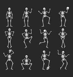 set funny halloween skeleton flat vector image