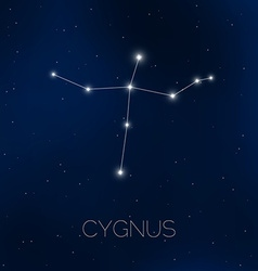 Cygnus constellation in night sky vector