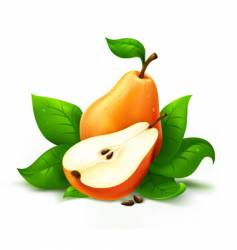 fresh pear with cut vector image