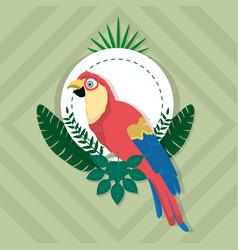 parrot exotic bird vector image